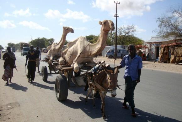 Los residentes afectados por la sequía transportan los camellos en carros   tirados por burros en la búsqueda de pastos más verdes en Mogadiscio, el 22 de abril. | Foto: Feisal Omar / Reuters