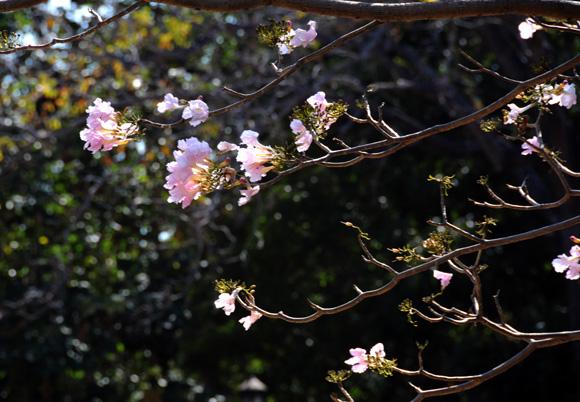 Flora del parque La Fraternidad. Foto: Ladyrene Pérez/Cubadebate.