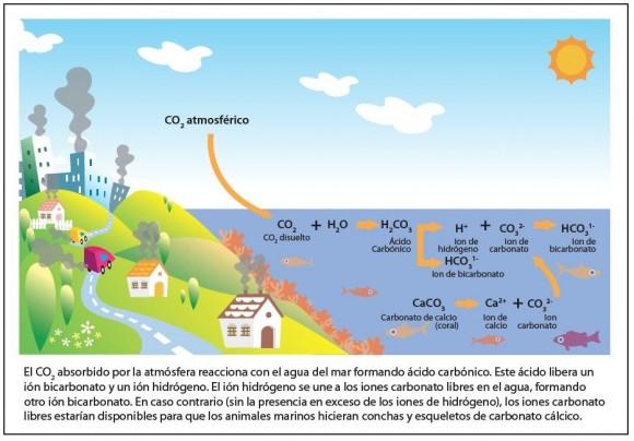 Procesos químicos en la acidificación marina