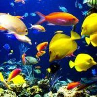 El calentamiento global afectará el movimiento y tamaño de los peces