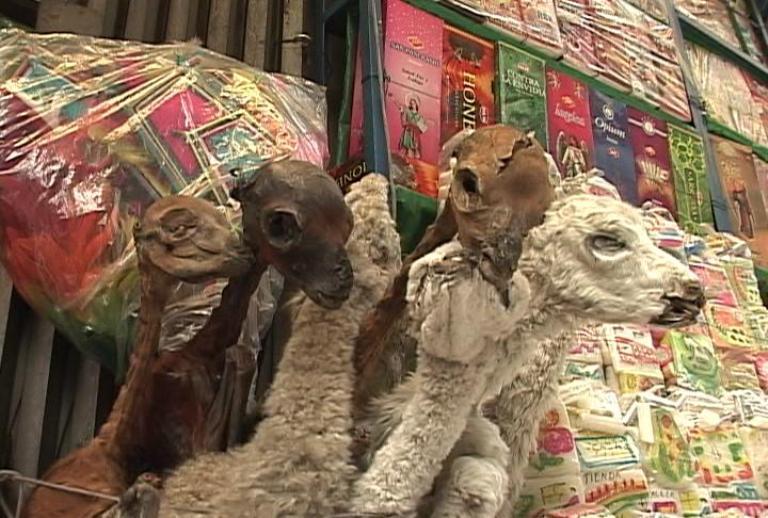 Bolivia y sus tradiciones  Fotos  Cubadebate