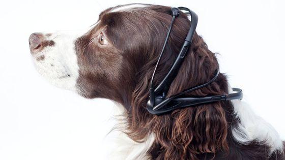 Ahora s hablan los perros Un dispositivo permite