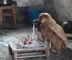 mascotas4marzo