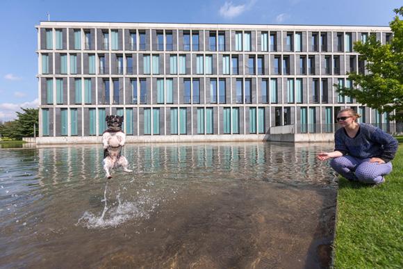 Frente a la corte Federal del Trabajo en Erfurt, Alemania, una mujer juega con su mascota mientras se baña en la fuente. Foto: Michael Reichel/AFP.