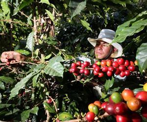 Producción-de-café-en-cuba