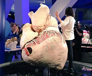 Exhiben en Canad el corazn ms grande jams visto