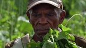 Trabajador agrícola cubano