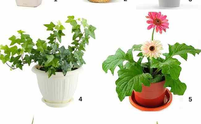 Spring Cleaning Air Filtering Houseplants Cubesmart