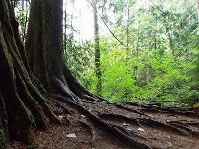 Vancouver Review: Hiking Lynn Canyon