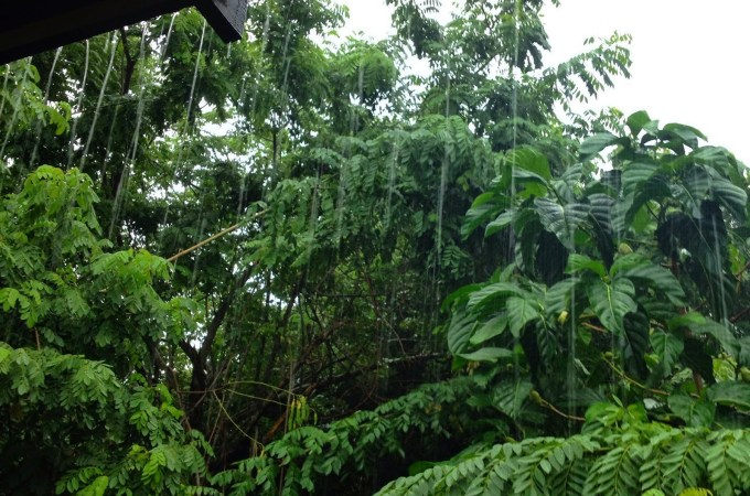 An Ode to Rainy Season