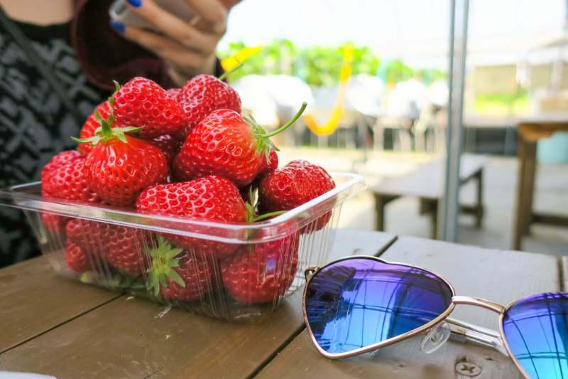 Yamagata Strawberry Picking