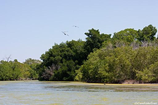 rio lagartos atractivo de yucatan