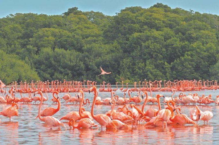 Celestún atractivos turistico natural de yucatan