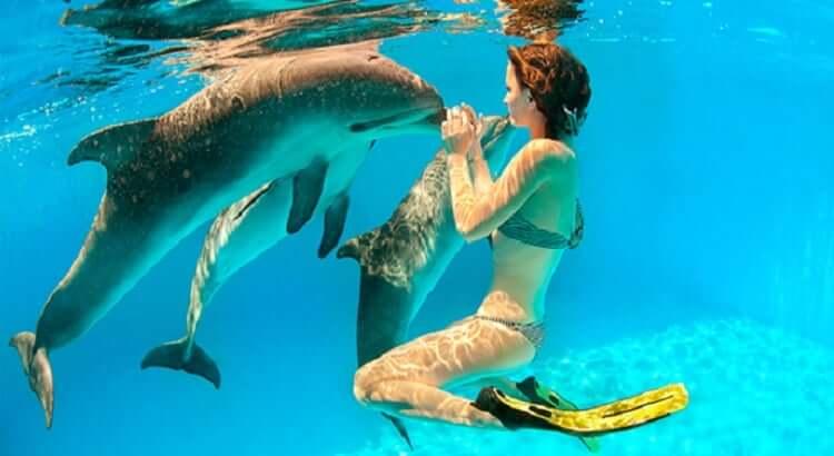 nado con delfines en cancun
