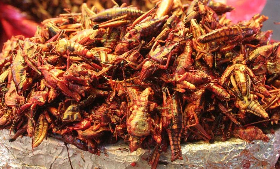 Chapulines platillos tipicos de tlaxcala