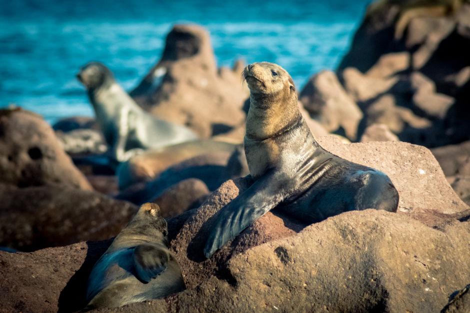 Isla Espíritu Santo atractivo baja california sur turismo