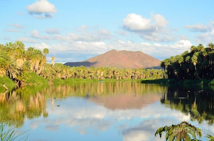 Oasis de San Ignacio