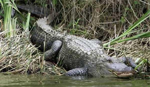 cocodrilos jungle tour cancun