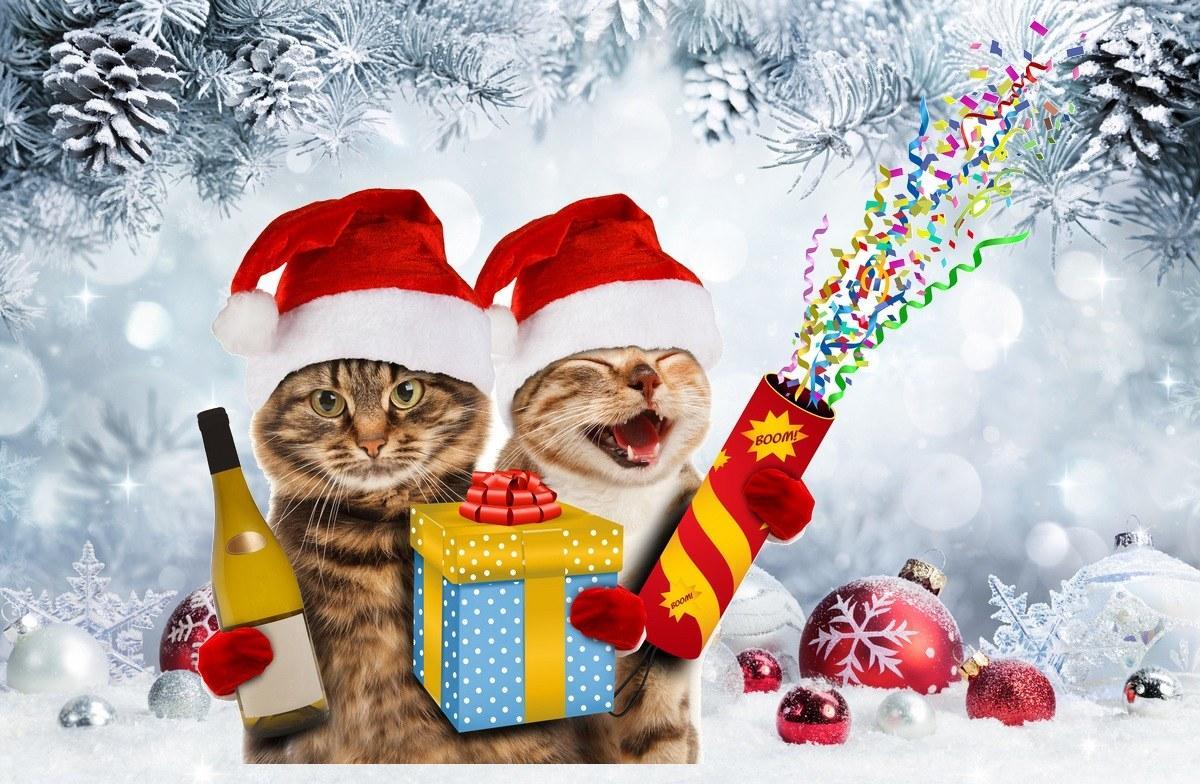 graciosas invitacion navidad