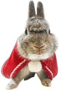 ropa para conejo
