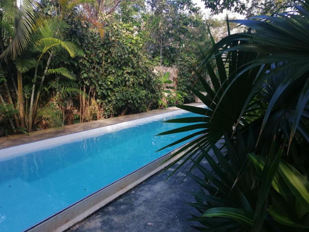 La Aldea alojamientos que admiten mascotas en cancun