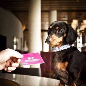 hotel alof cancun pet friennly