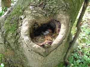 Cultureel Brabant CuBra Bomen bomen gedichten Leo Mesman