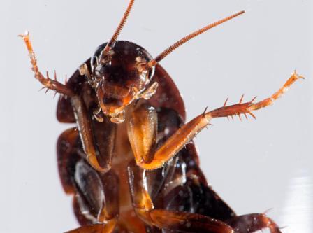 Resultado de imagen para cucaracha