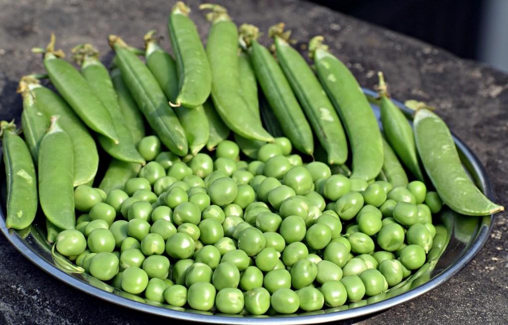 fresh peas dish