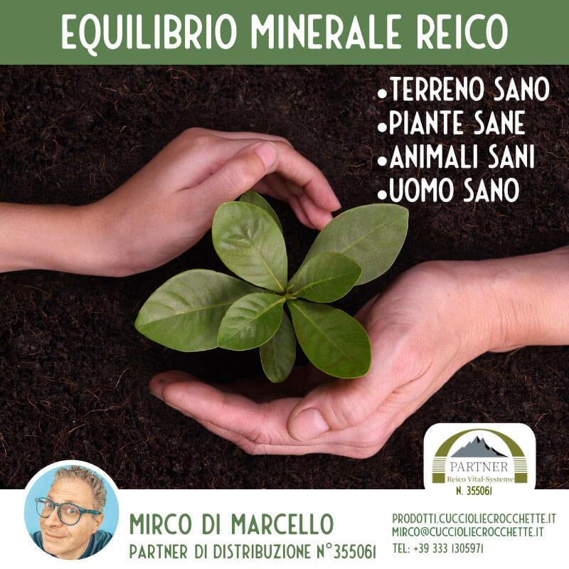 Equilibrio minerale reico prodotti