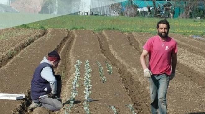 Bergamo Anche nel mio orto cresce linsalata  Cucina Naturale