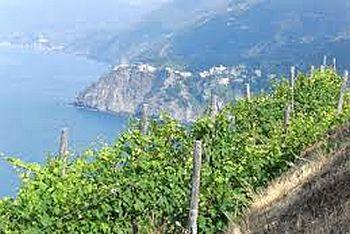 Liguria di Levante IGT