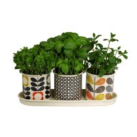 Orla Kiely Set Of 3 Herb Plant Pots On Tray - Orla Kiely ...
