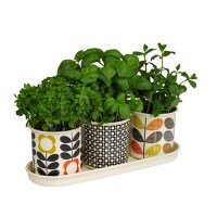 Herb Pots For The Kitchen - Home Safe