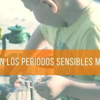 La importancia de detectar los periodos sensibles del niño Montessori