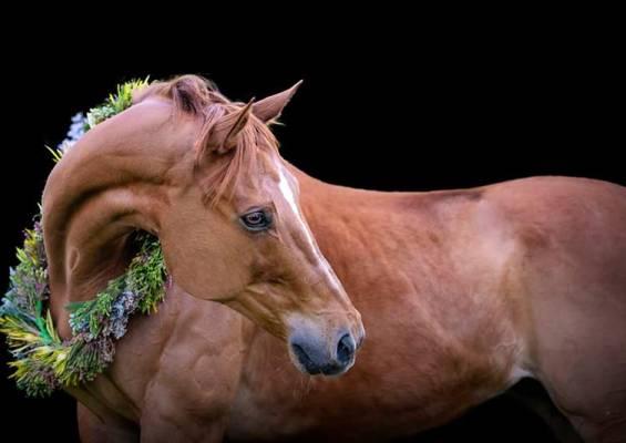 Horse-Flower-crown
