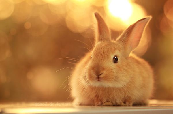 50 cute bunny pictures