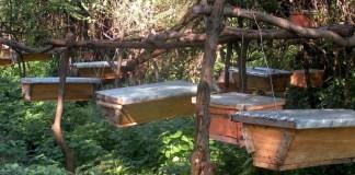Bee Keeping in Kenya