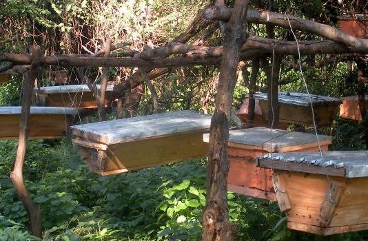 Bee Keeping in Kenya