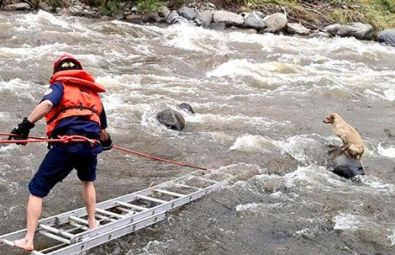 This dog found refuge on a rock in the Yanuncay River and was rescued by firemen
