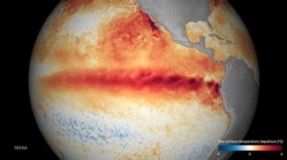 A satellite composite of El Niño shows, in red, areas of highest seawater surface temperatures.