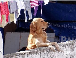 FugitFoto100 This pooch looks like he's been hung out to dry.