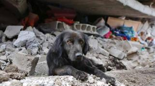 A dog sits in the rubble of his home. Credit: El Comercio