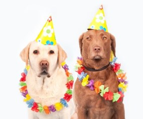 two dogs wearing party hats