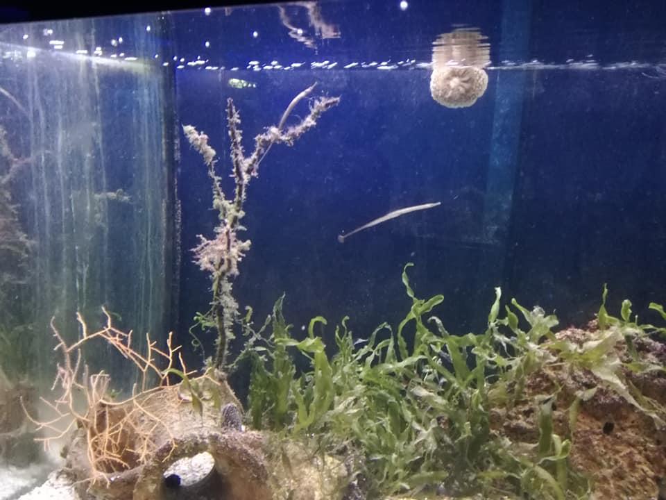 Uno de los 9 acuarios del Acuario Municipal de Santa Pola