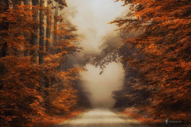 fall_in_love_by_larsvandegoor-damaoa7