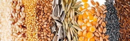 semillas fibra