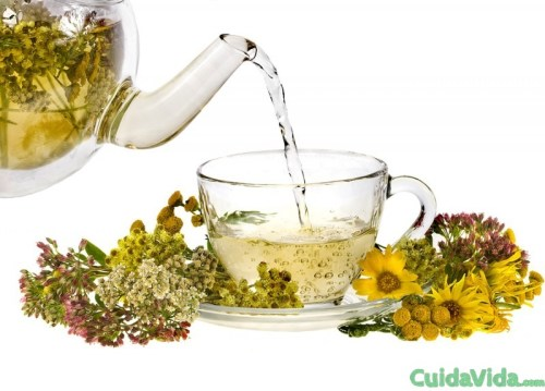 infusion hierbas medicinales