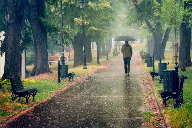 Rainy Day In The Park. Man Walking With Umbrella Under The Rain ...