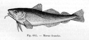 moruecomraillet1895p968